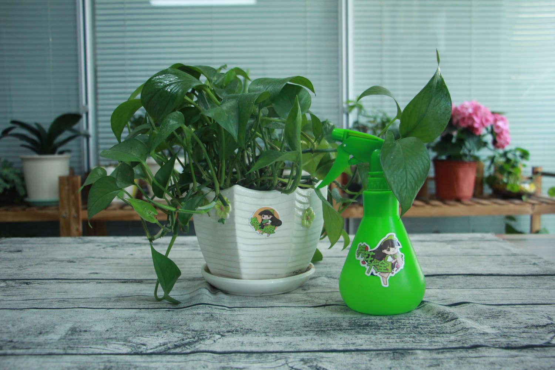 绿萝叶子发黄烂根是什么原因图片
