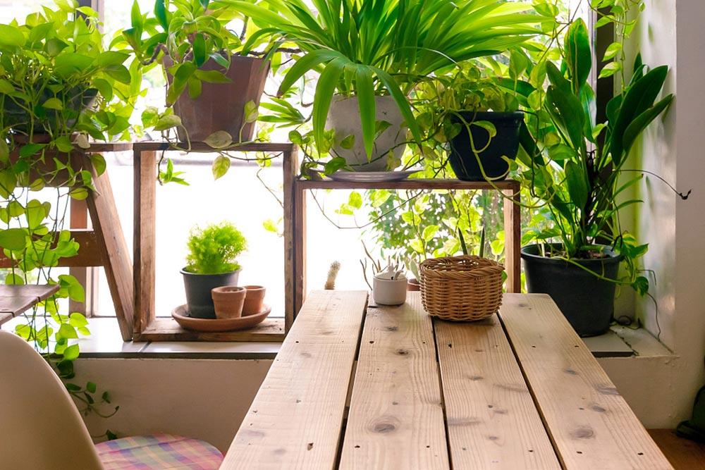 米竹怎么养才茂盛图片