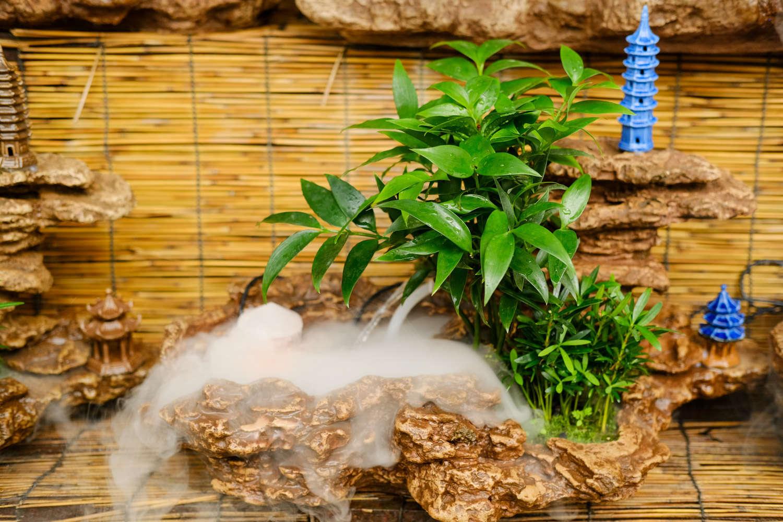 盆栽植物竹柏种植方法图片
