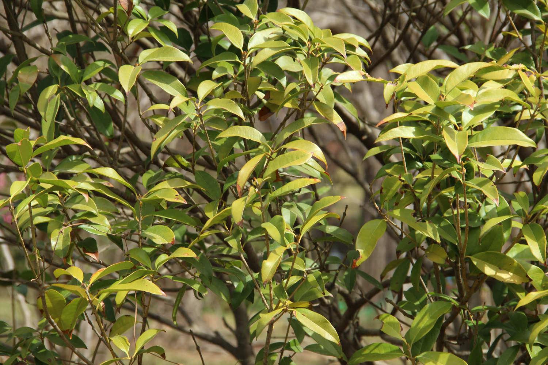 安知南山桂,绿叶垂芳根。