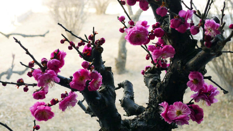 Taiping Flower
