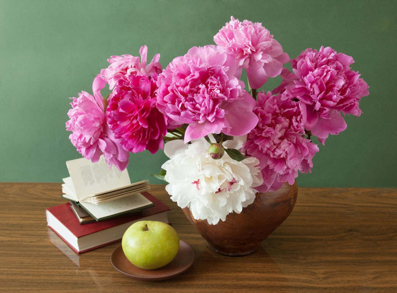 粉色芍药,誉满天下