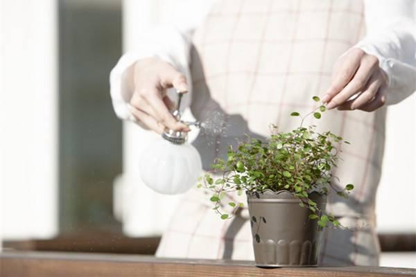 6种浇花小方法,简单又实用!