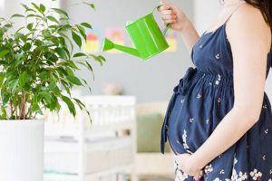 家有孕妇,这些植物不能养