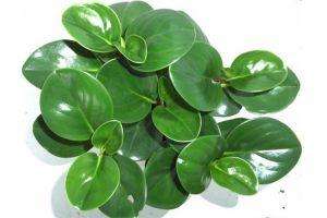 豆瓣绿常见病虫害及防治方法