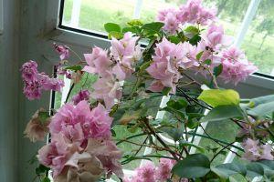 新买来的花到底该如何养护?