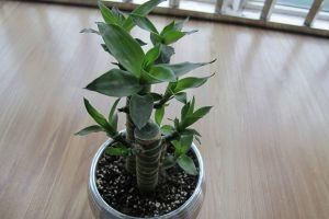 室内摆放七种可以转运的植物