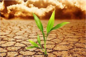 如何防止盆景、盆花土壤板结