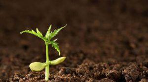 怎么给土壤消毒