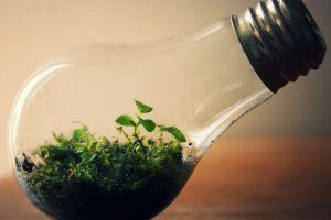 教你把废弃灯泡秒变创意小花盆,快来看