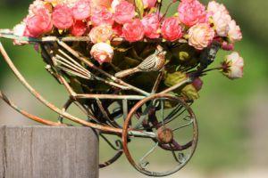 自行车上的花园景致,生活真美好