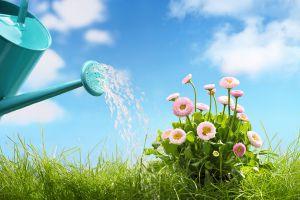 养花浇水要知道这5点