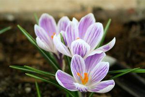 选择花卉,先看室内光线