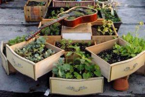 旧抽屉、木盒子不要扔,用它种花很漂亮