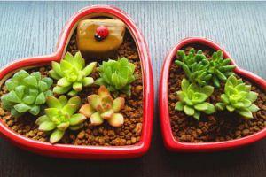 观叶植物也可以拼盘组盆