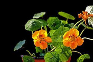常使用的家庭养花方法,你知道几个