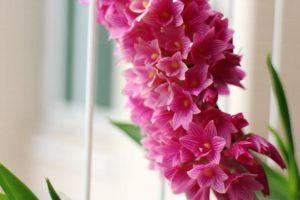 红花石斛常见虫害及防治方法