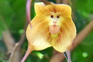 猴面小龙兰常见虫害及防治方法