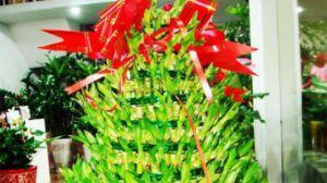 如何制作富贵竹的宝塔型盆景