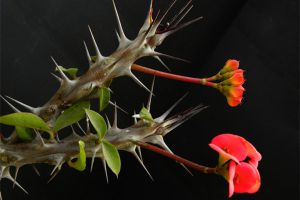 能导致癌症的花卉有哪些