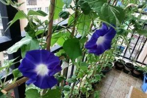 种出来的植物窗帘,隔热降温还净化空气