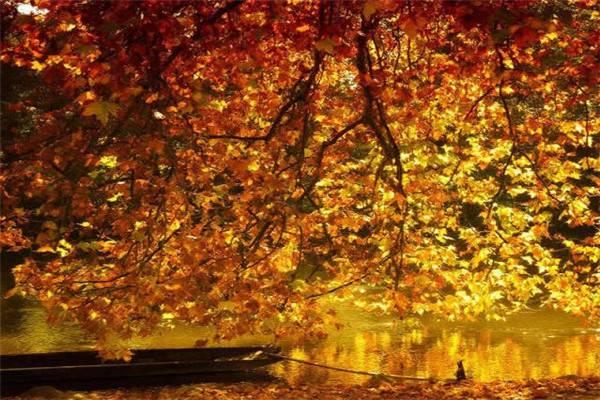 这才是美到六亲不认的秋天!
