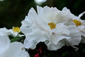 家庭常见花卉养护宝典,有了它,养花不再难
