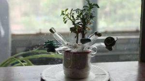 塑料瓶编花造型花盆教程
