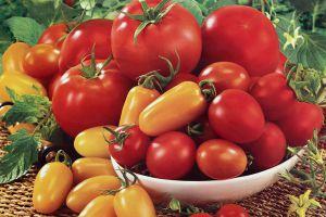 1个番茄也能种出一个菜园