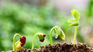 怎么辨别土壤是酸性还是碱性
