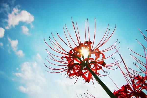 养花与人体健康之间的大秘密,你不能不知道