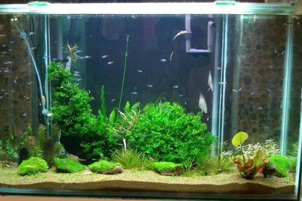 极致梦幻的水草鱼缸景观