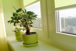 50种家庭室内植物,这么养再也不会死