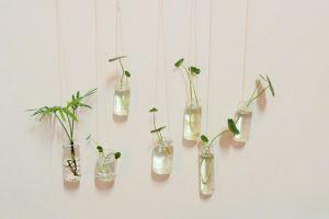 水培植物必须换水洗根,你知道吗