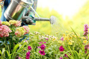 用这些水浇花,不需要施肥啦!