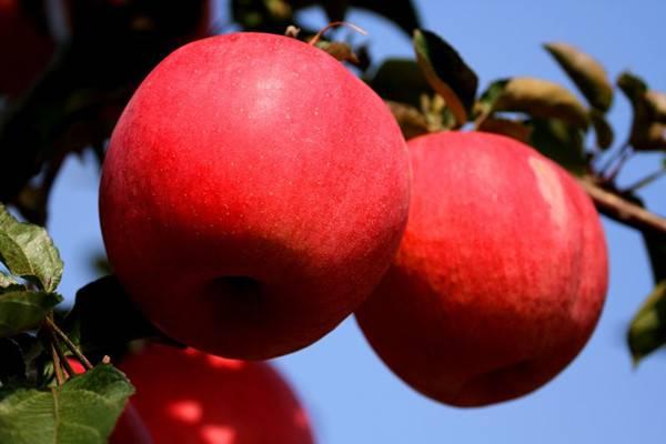 史上最奇葩的7种果实
