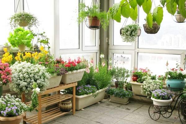 家里变花园,15种花任你选