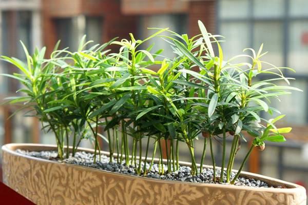 室内观叶植物的养护月历大全
