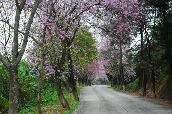 那些跟花儿有关的路,我想和你一起走