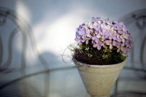秋季降温,盆花入室要点