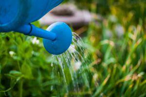 用这些水浇花,花儿更健康!