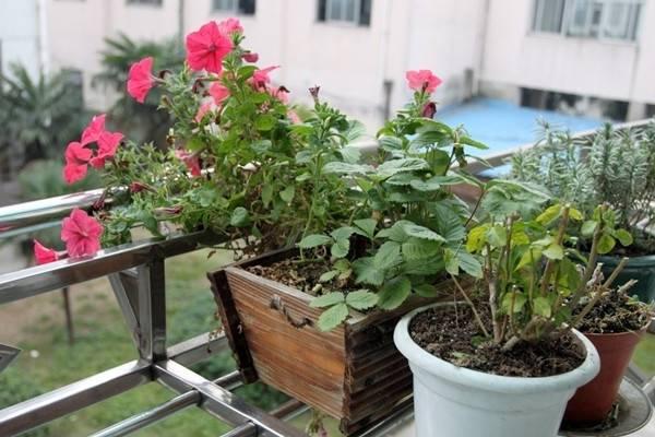 木屑也可以养花,太实用了