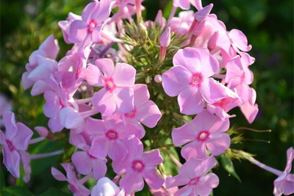 现在入手这13种花,不怕冬天没花赏