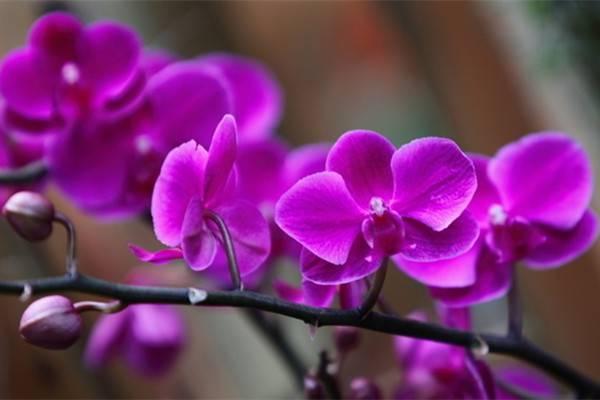你因为北阳台而哭泣,她却种出一个绝美花园