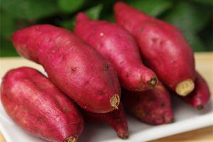 红薯水培教程来了,吃它胜过吃人参