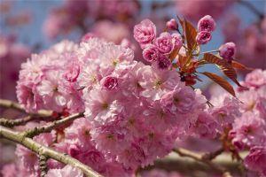海棠花虫害及防治大全