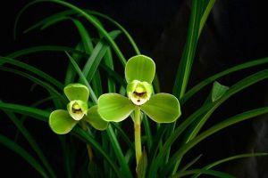 宋梅的开花管理及开花欣赏