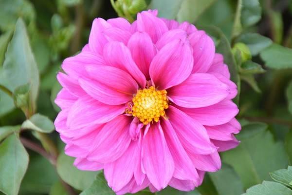 这8种花只需种一次,让你每年都有花赏