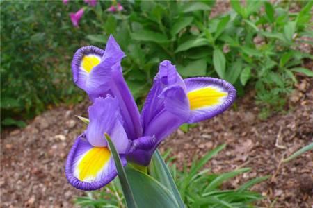 世界上最稀有的9种花,看1次少1次了