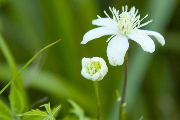 38种常见花卉养护秘籍,养不好就看这!